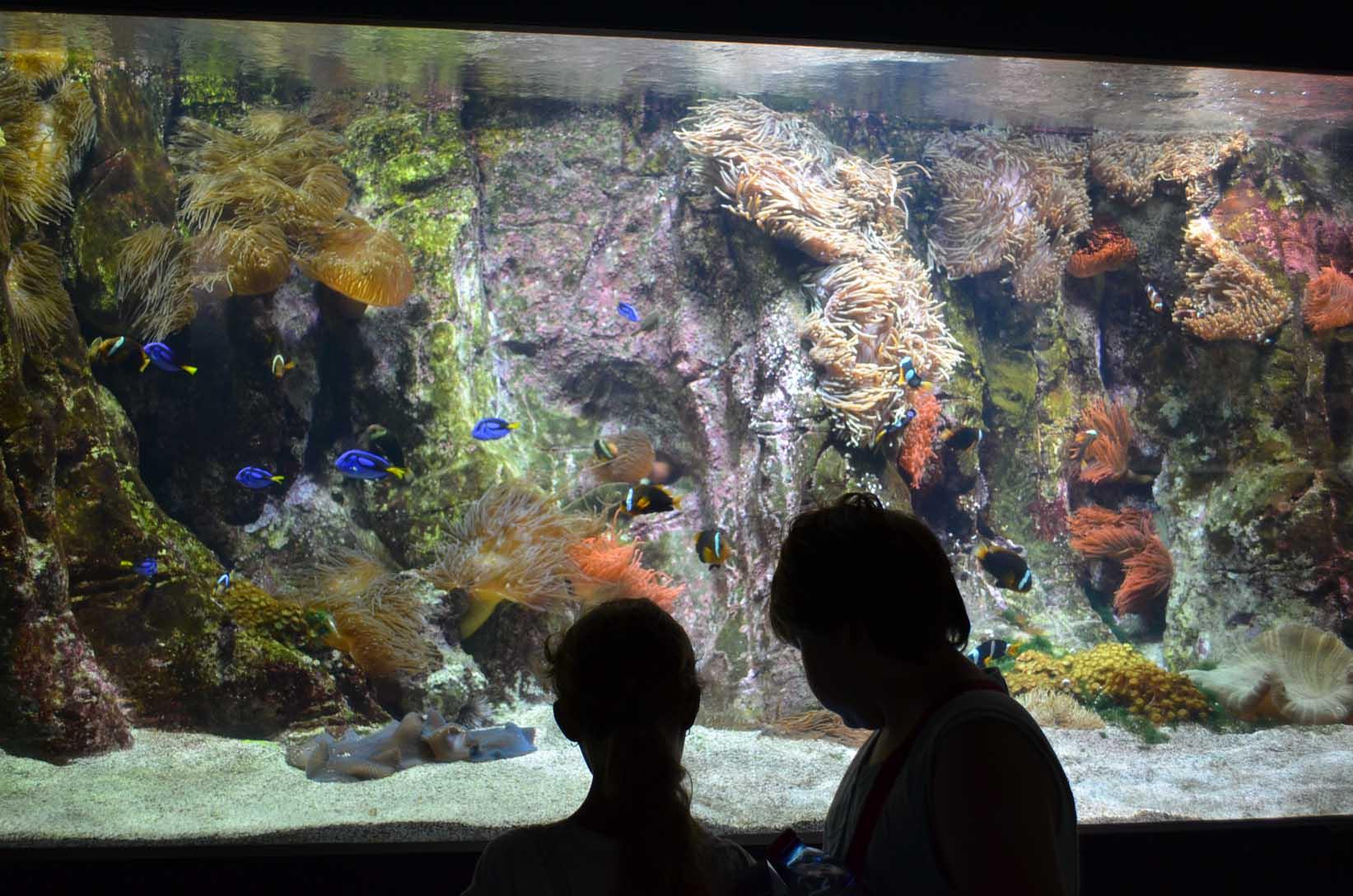 aquarium coutant la rochelle