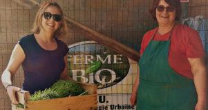 broncy potager