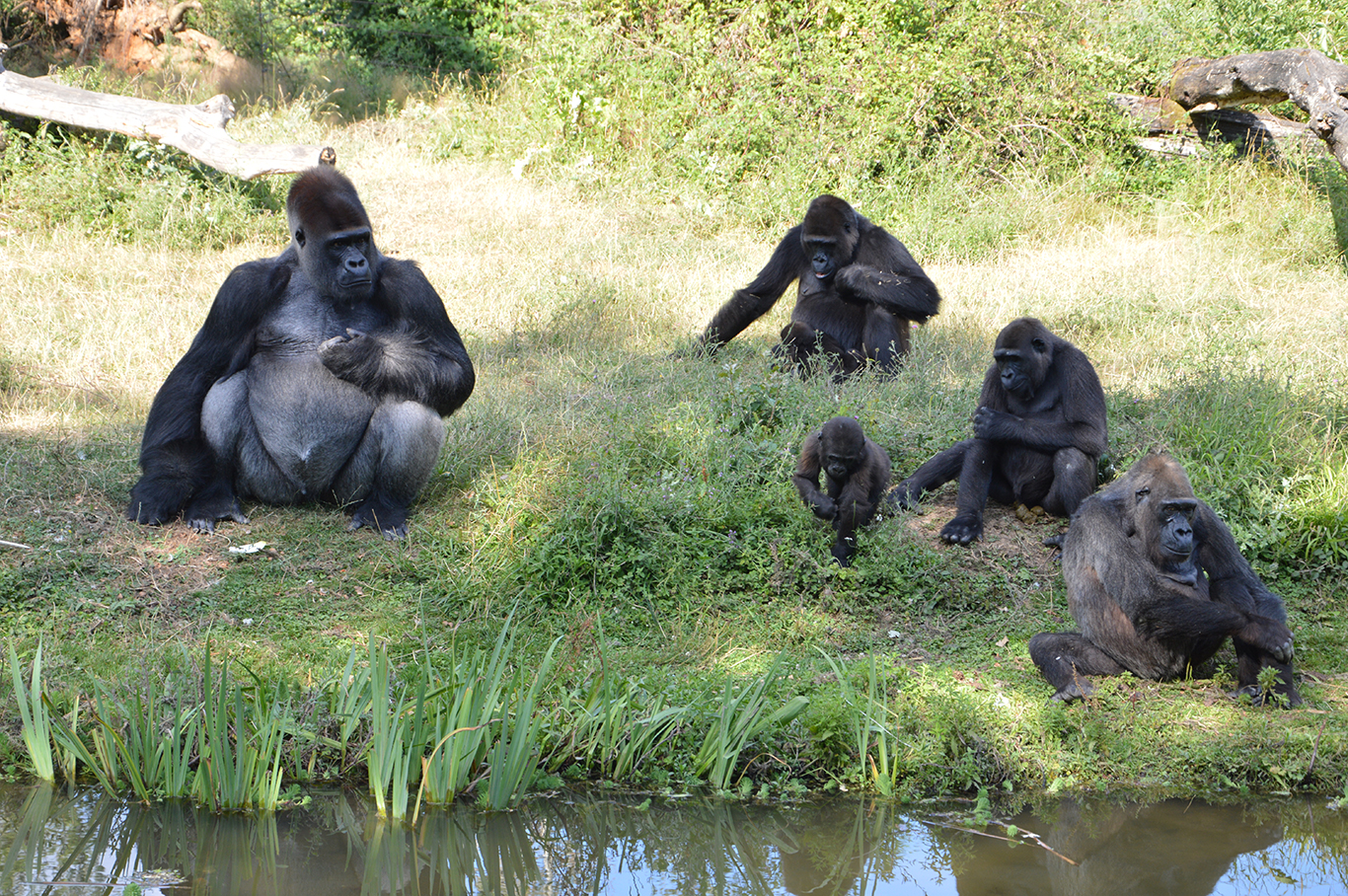 vallée singes